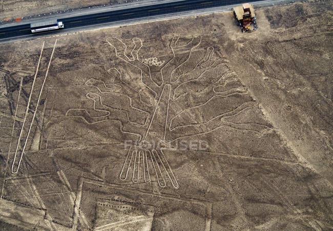 Таинственный геоглифы дерево — стоковое фото