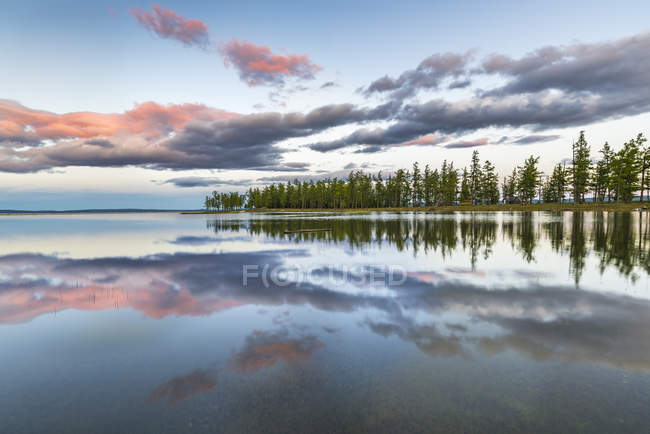 Fir trees and Hovsgol Lake — Stock Photo