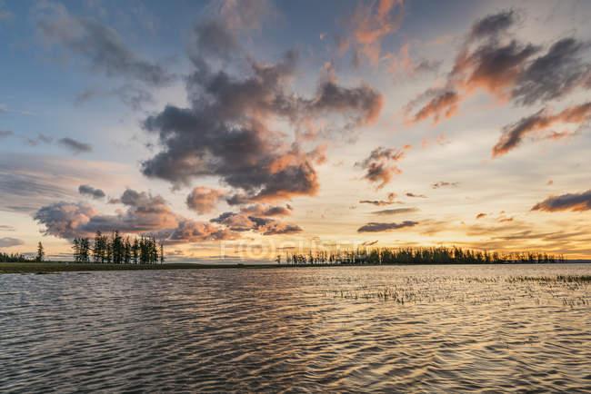 Abetos y las nubes al atardecer - foto de stock
