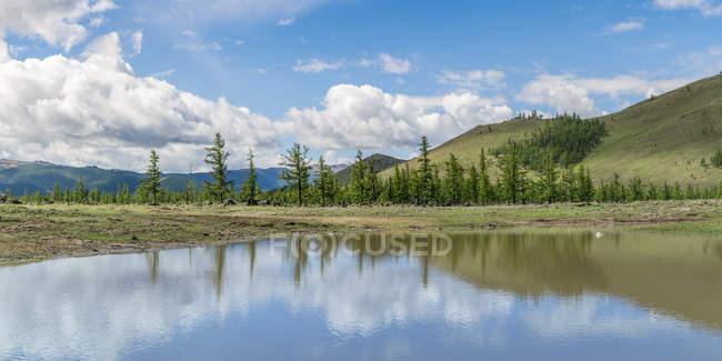 Árboles de abeto y estanque de agua - foto de stock