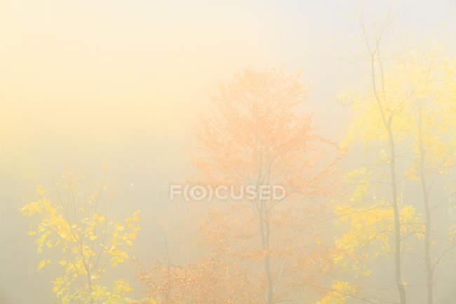 Туман в осінній ліс — стокове фото