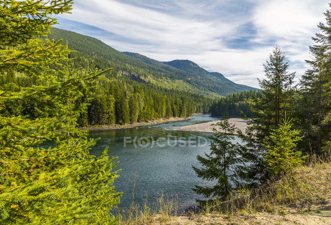 Mountain river and woods — Stock Photo
