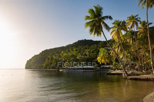 Долоні на маленькому пляжі в Marigot Bay — стокове фото