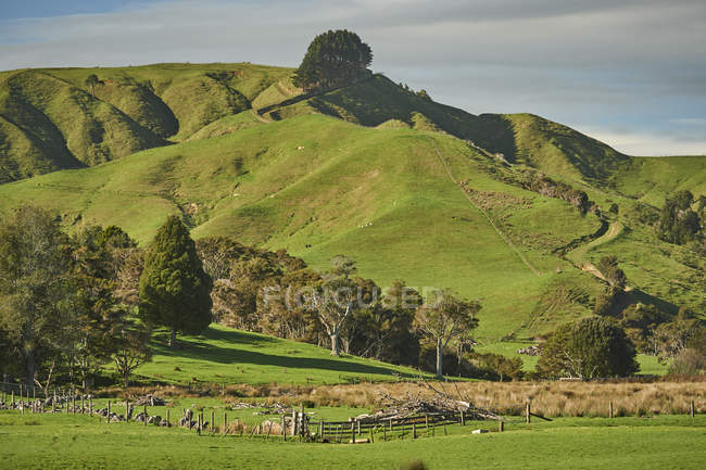 Te Ohaki volcanic landscape — Stock Photo