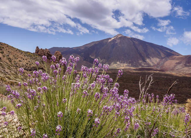 Wildflowers and Teide Mountain — Stock Photo
