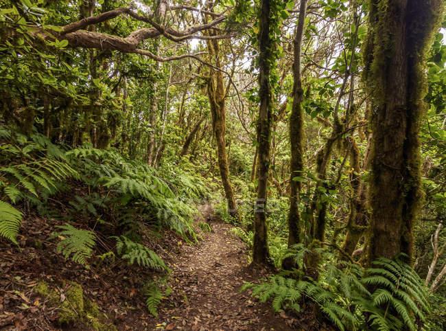 Bosque Encantado laurel forest — Photo de stock
