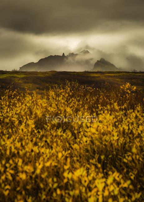 Полевые цветы и туманные горы — стоковое фото