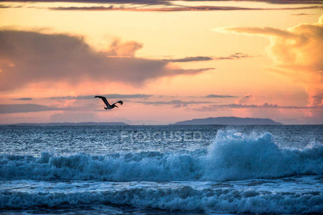 Volo su Buena Vista, spiaggia del pellicano — Foto stock