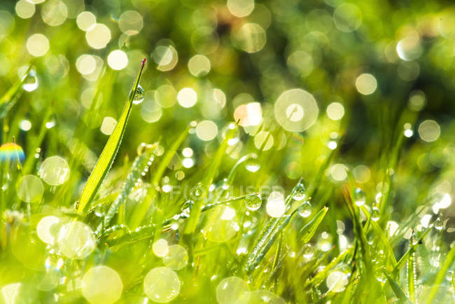 Morning dew on grass — Stock Photo