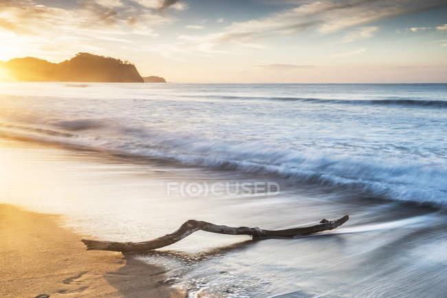 Driftwood sulla spiaggia di Playa Buena Vista — Foto stock