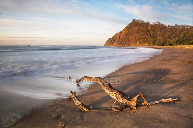 Driftwood sulla spiaggia di Playa Buena Vista all'alba — Foto stock