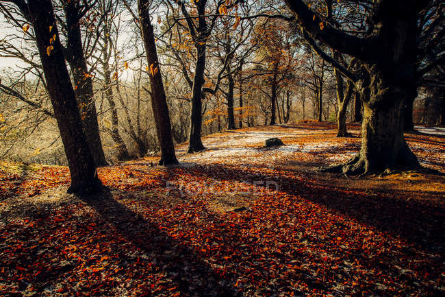 Autumn woodland in sunny weather — Stock Photo