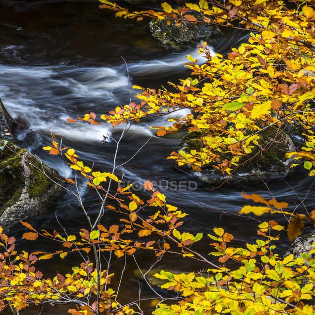 Осенняя листва и горные реки, протекающей — стоковое фото