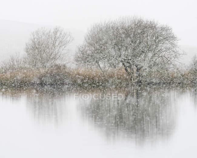 Árboles desnudos junto al lago durante nevadas en invierno - foto de stock