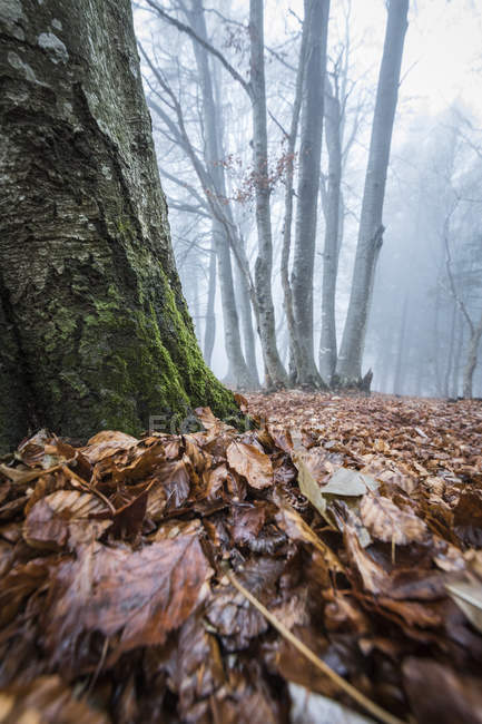 Autumn foliage on ground in misty forest — стокове фото
