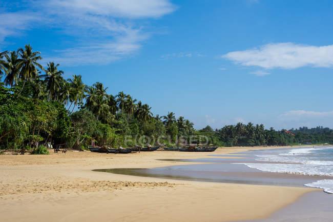 Песчаный пляж Talalla с пальмами на южном побережье Шри-Ланки, Азии — стоковое фото