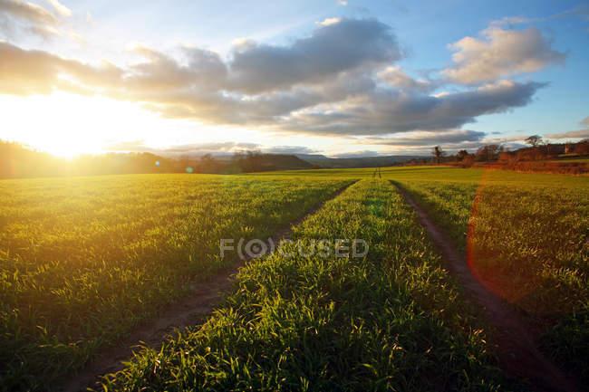 За способом дорожньо через поле на заході сонця, Monmouthshire, Уельс, Велика Британія — стокове фото