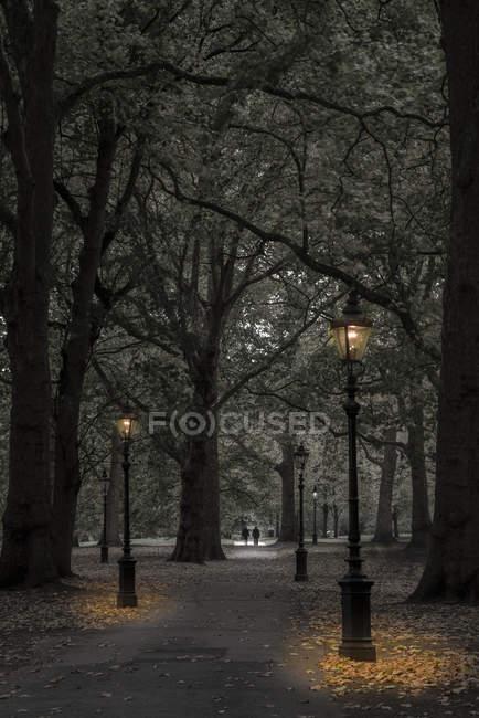 Green Park à la tombée de la nuit à l'automne, Westminster, Londres, Angleterre, Royaume Uni — Photo de stock