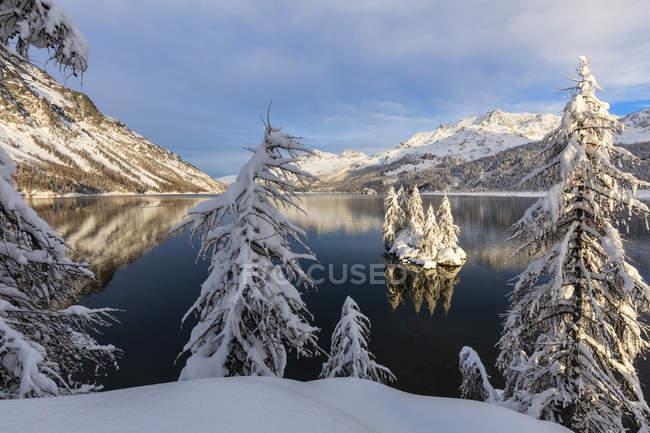 Snow covered trees on shore of frozen Lake Sils, Plaun da Lej, Maloja Region, Canton of Graubunden, Engadine, Switzerland — Stock Photo