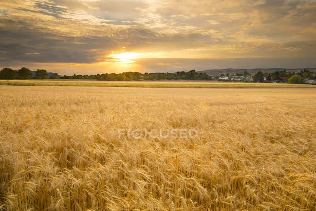 Sonnenuntergang über einem Gerstenfeld im Sommer, Österreich — Stockfoto