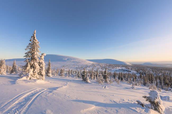 Couvert de neige, collines et les arbres dans la lumière du soleil sous un ciel bleu, le Parc National de Pallas-Yllastunturi, Muonio, Laponie, Finlande — Photo de stock
