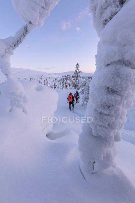 Туристы на снегоступах, проснувшись в заснеженном лесу, Национальный парк Паллас-Юлластунтури, Муонио, Лапландии, Финляндия — стоковое фото