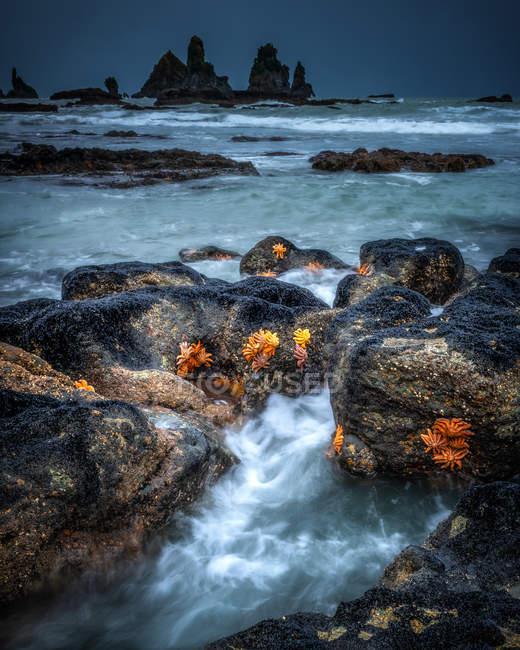 Seestern auf Felsen von Motukiekie Beach, Punakaiki, Südinsel, Neuseeland — Stockfoto