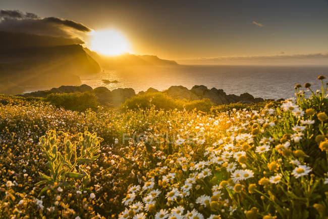 Costa rochosa e primavera flores ao pôr do sol — Fotografia de Stock