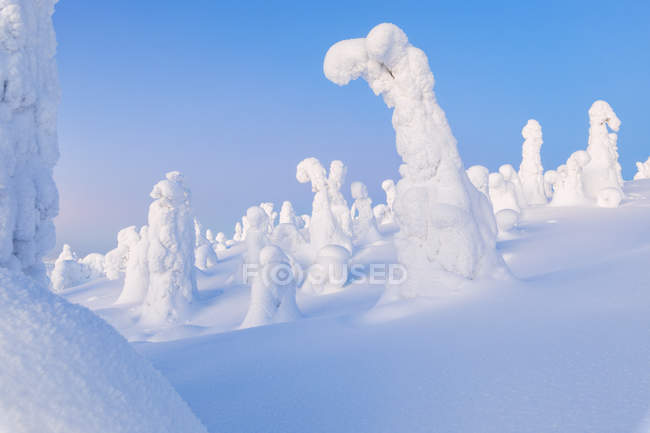 Shapes of frozen snow covered trees under clear sky — Stock Photo