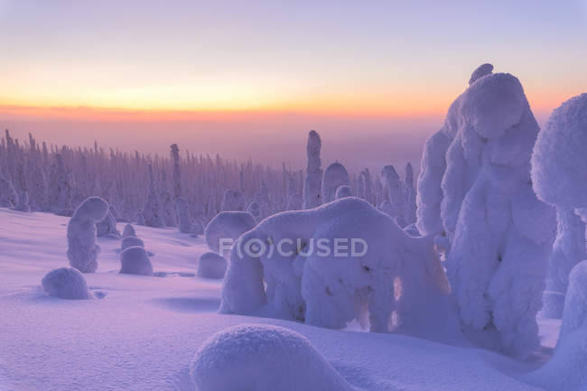 Shapes of frozen snow covered trees at sunrise — Stock Photo