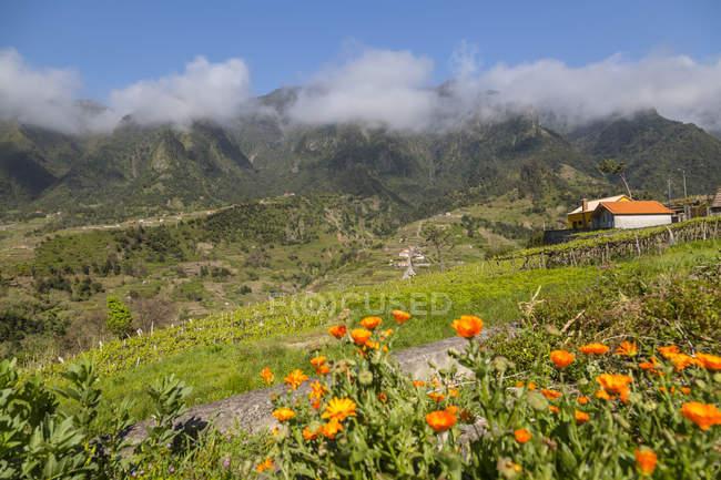 Paisagem rural de montanha com flores silvestres entre São Vicente e Funchal, Madeira, Portugal — Fotografia de Stock