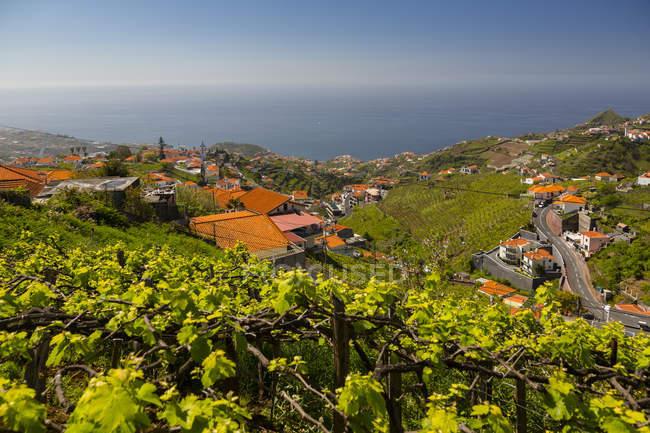 Vinhedo na costa, em zona rural e edifícios tradicionais, Cabo Girao, câmara de Lobos, Madeira, Portugal — Fotografia de Stock