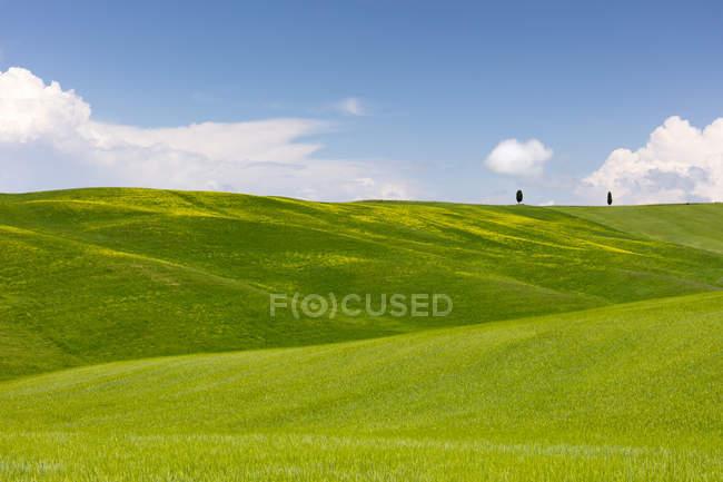Grünes Feld mit Zypressen und blauer Himmel in Val Dorcia Tal, Toskana, Italien, Europa — Stockfoto