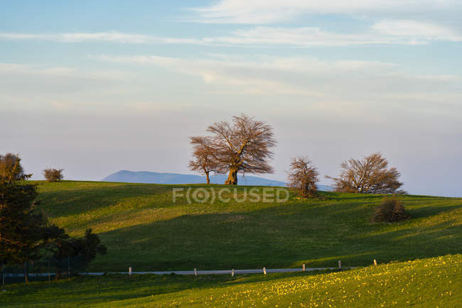 Blooming field and trees in spring at sunset, Mount Petrano, Marche, Italy, Europe — Stock Photo
