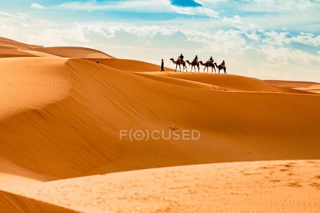 Camelos, andando em uma linha em dunas de areia no deserto de Merzouga, Marrocos, norte da África, África — Fotografia de Stock