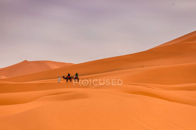 Dunes de sable dans le désert de Merzouga avec chameaux sur fond, Maghreb, Maroc — Photo de stock