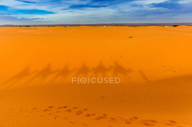 Sombra de camelos em uma linha na areia no deserto de Merzouga, Marrocos, norte da África, África — Fotografia de Stock