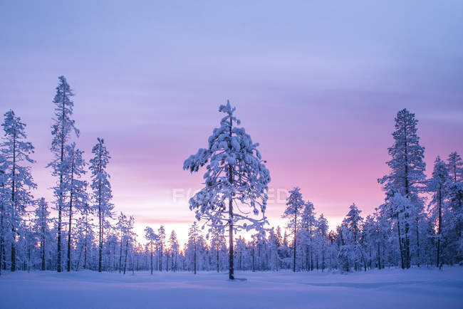 Snow covered winter landscape at sunrise, Lapland, Pallas-Yllastunturi National Park, Lapland, Finland — Stock Photo