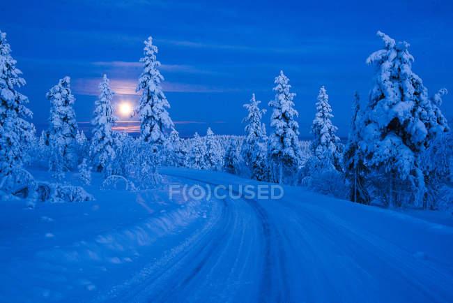 Повний місяць і дороги в зимовому лісі — стокове фото