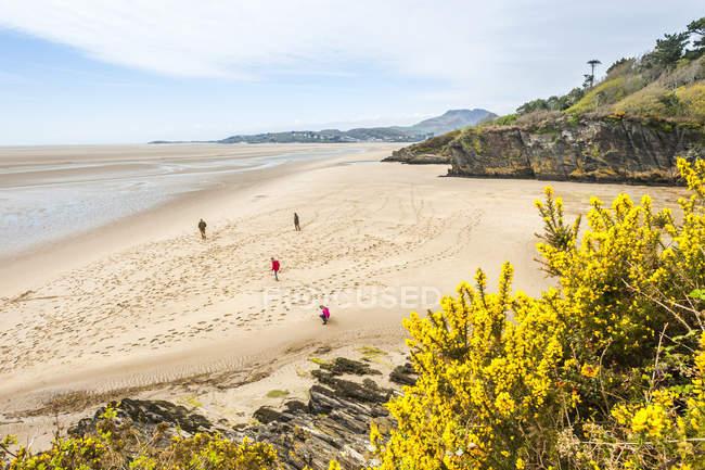 Sandy ocean beach, Portmeirion, Gwynedd, North Wales, Wales, United Kingdom — Stock Photo