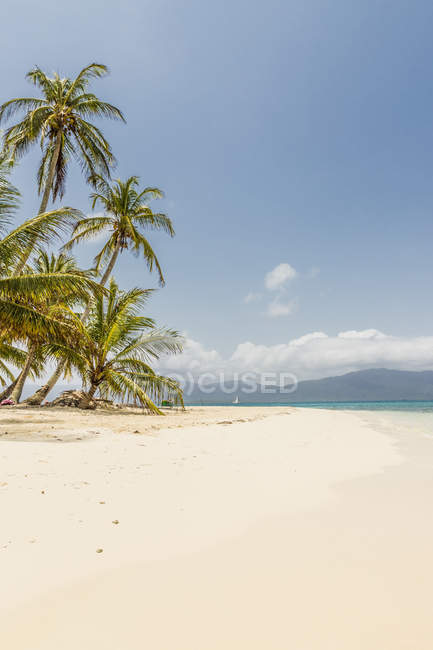 Paradise Island Pelicano with palm trees in the San Blas Islands, Kuna Yala, Panama, Central America — Stock Photo