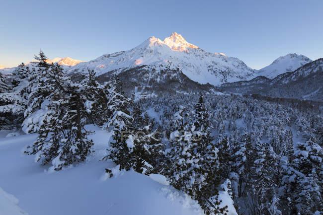 Couvert de neige sapins dans les montagnes, le col de la Maloja, Val Bregaglia, Engadine, Canton des Grisons, Suisse — Photo de stock
