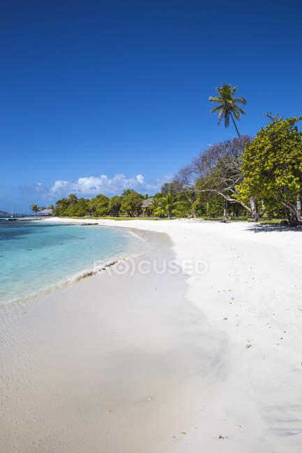 Піщані пляжі з пальмами, Petit Сент-Вінсент, Гренадін, Вест-Індії, Карибського басейну, Центральної Америки — стокове фото