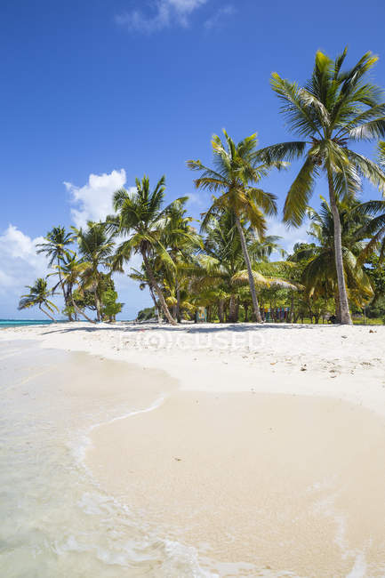 Paradise sandy beach with palm trees, Petit Bateau, Tobago Cays, The Grenadines, West Indies, Caribbean, Central America — Stock Photo