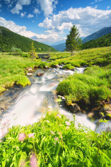 Stream flowing in green Stelvio National Park, Mortirolo Pass in Vall Camonica, Brescia, Lombardy dsitrict, Italy — Stock Photo
