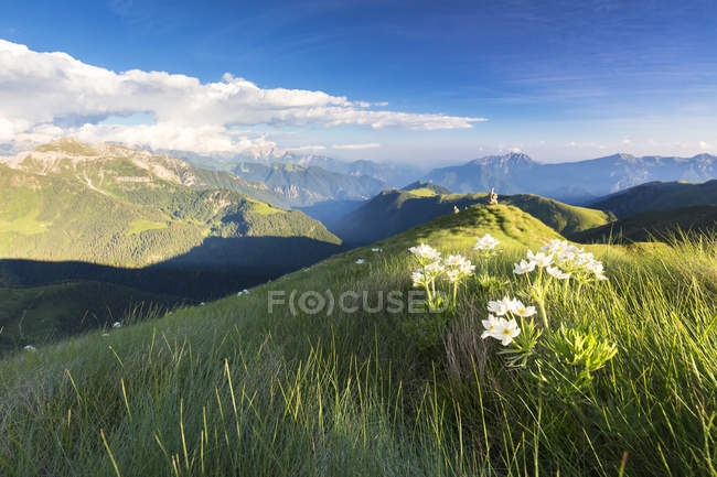 Wild flowers on crest towards Monte Azzarini with Bergamo Orobie Alps on background, San Marco Pass, Lombardy, Italy — Stock Photo