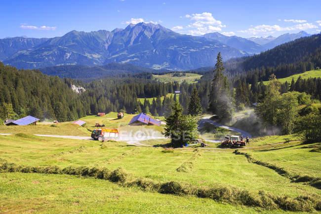 Coltivazione di fieno di estate sul pendio di montagna, Flims, Svizzera, Cantone dei Grigioni, distretto di Imboden — Foto stock