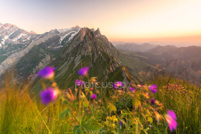 Wild flowers on top of Schafler with rocky peak Santis on background, Appenzell Innerrhoden, Switzerland, Europe — Stock Photo