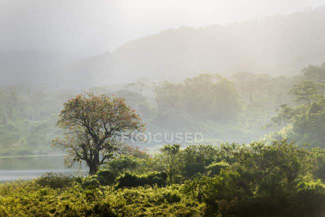 Краєвид тропічного лісу при сходом сонця, вулкан Ареналь Національний парк, провінція Alajuela, Коста-Ріка, Центральна Америка — стокове фото