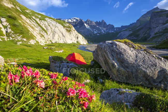 Red tent on grass in rocky mountains and blooming wildflowers, Unterer Segnesboden, Flims, District of Imboden, Canton of Grisons, Switzerland — Stock Photo
